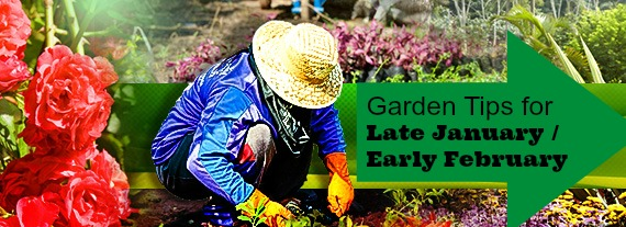 Garden-Tips-For-January and February