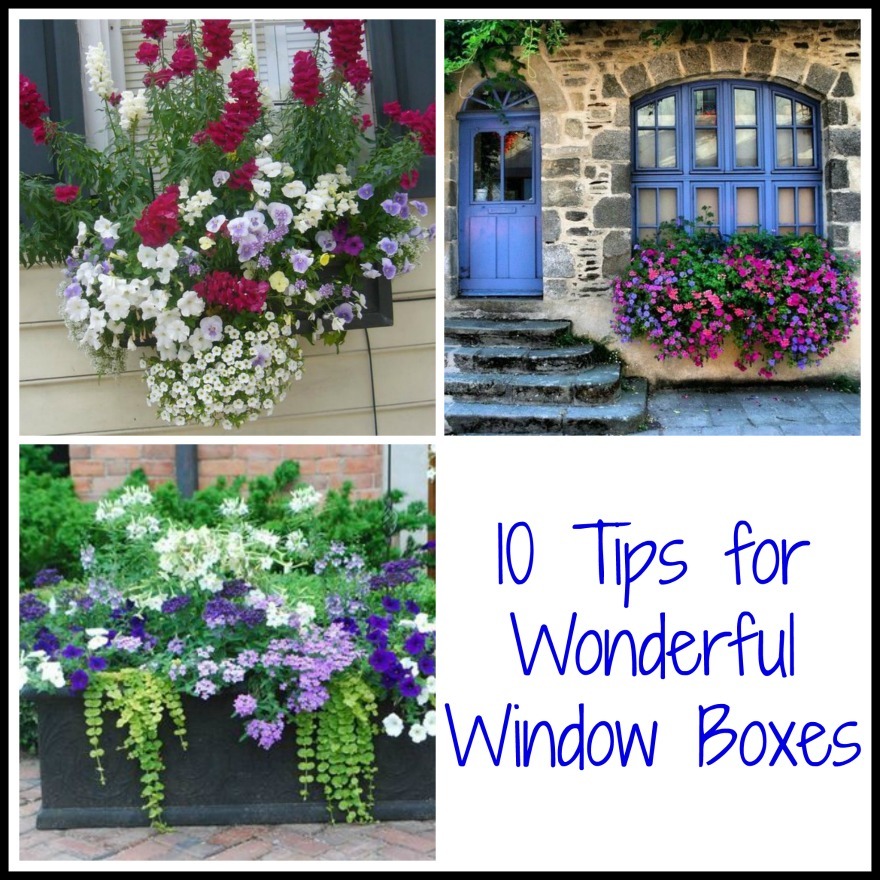 10 Tips for Wonderful Window Boxes