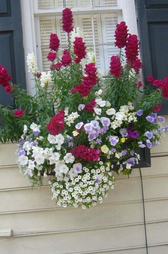 windowbox tall flowers