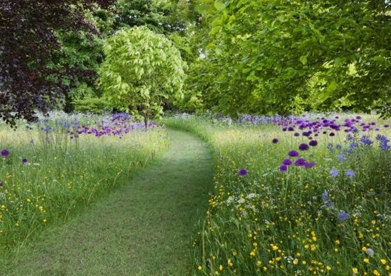 Garden path wild flower meadow