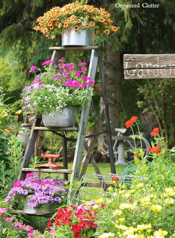 Ladder as Garden display